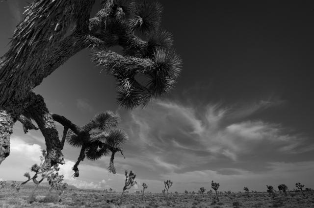 August 2014 Joshua Tree & Salton Sea-1299