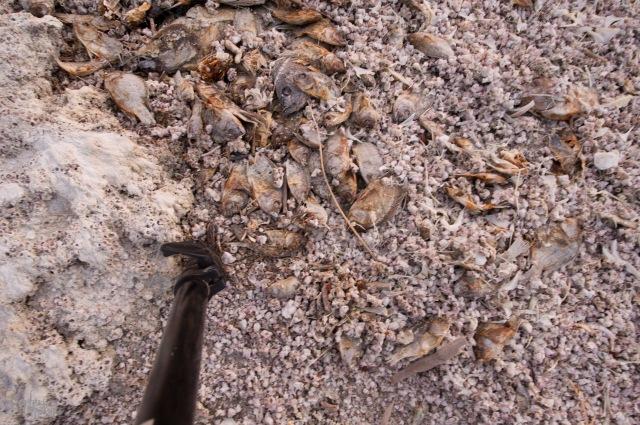 August 2014 Joshua Tree & Salton Sea-1471