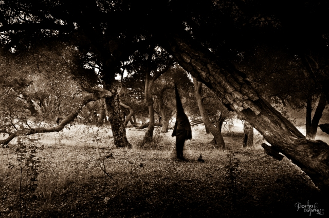 October 2014 Cheseboro Canyon Occult Second Edit-3322